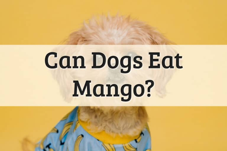 Can Dogs Eat Mango Feature Image