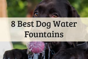 Best Dog Water Fountain Feature Image