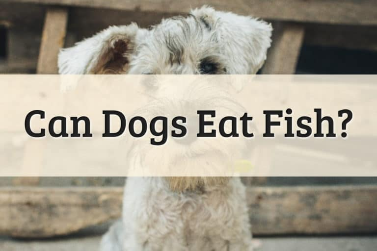 Can Dogs Eat Fish Feature Image