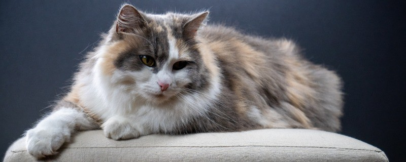 Cat Sneezing Could Be Due To Upper Respiratory Infections