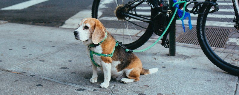 Keep Your dog at a Healthy Weight