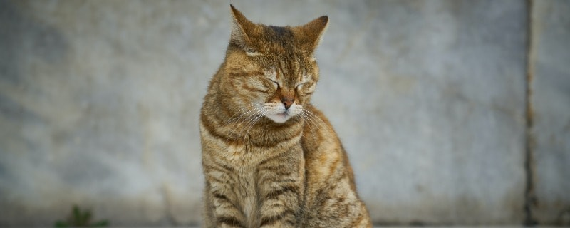 Various Foreign Substances Can Cause Cats to Sneeze