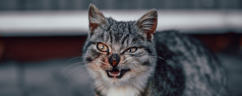Different Causes of Sneezing for Cats