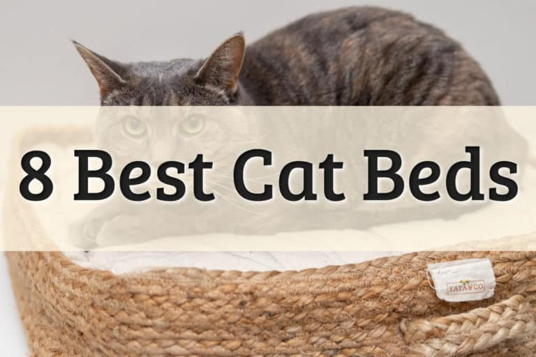 Best Cat Beds Feature Image