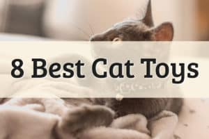 Top 8 Best Cat Toys Feature Image