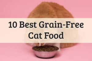 Best Grain Free Cat Food Feature Image