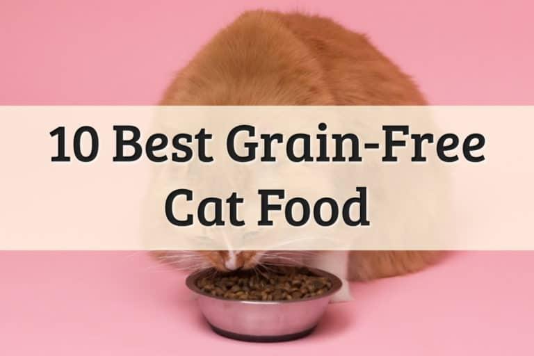 Best Grain Free Cat Food Feature Image