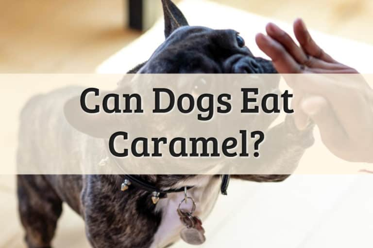 Can Dog Eat Caramel Feature Image