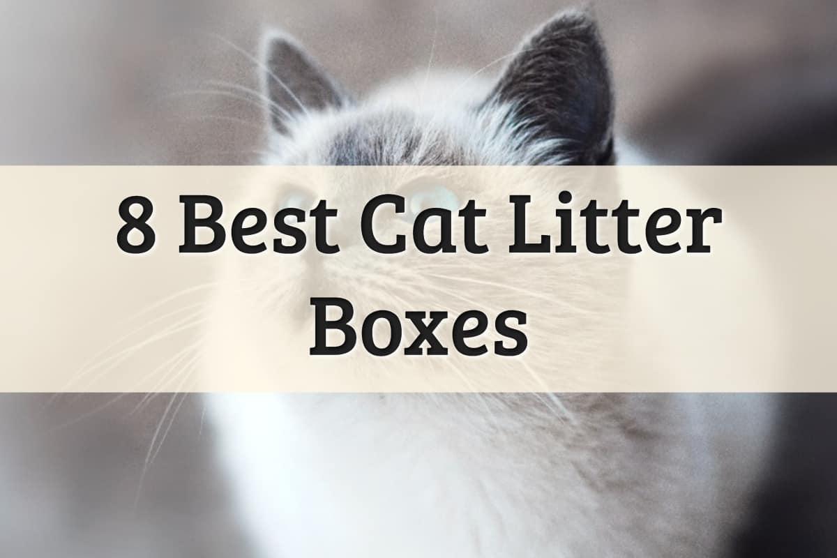 Best Cat Litter Box Feature Image