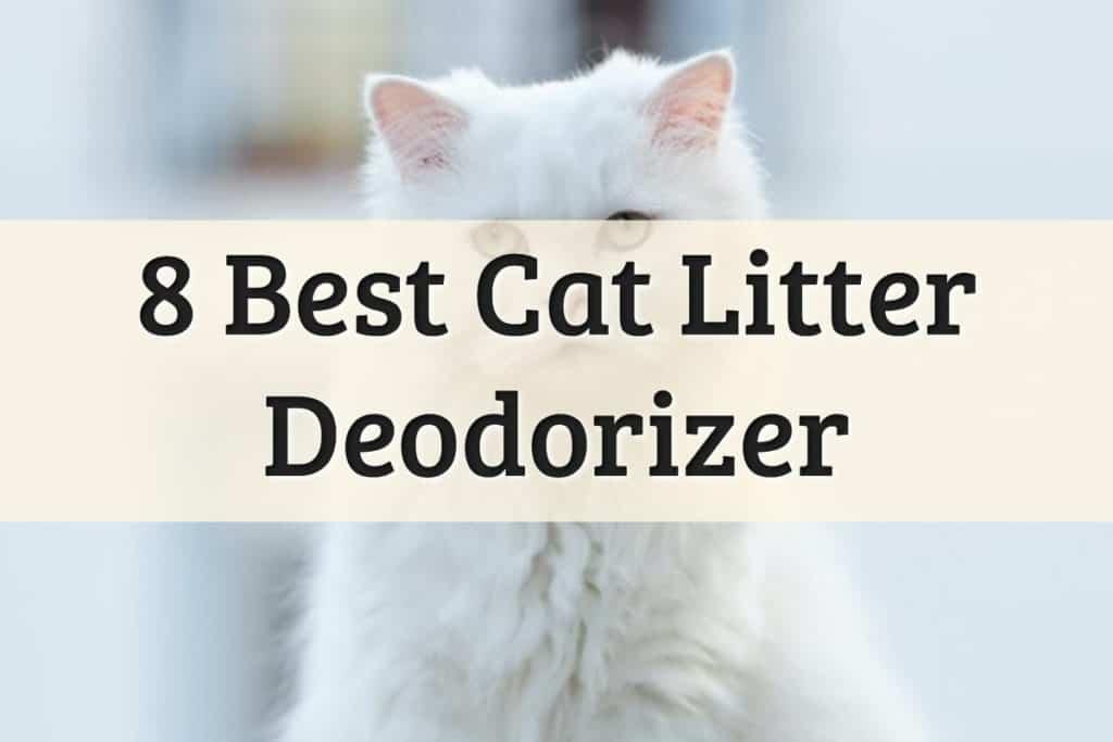 Cat Litter Box Deodorizer Feature Image