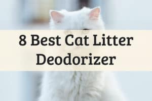 Cat Litter Box Deodorizer Feature Image