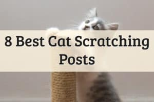 Best Cat Scratching Post Feature Image