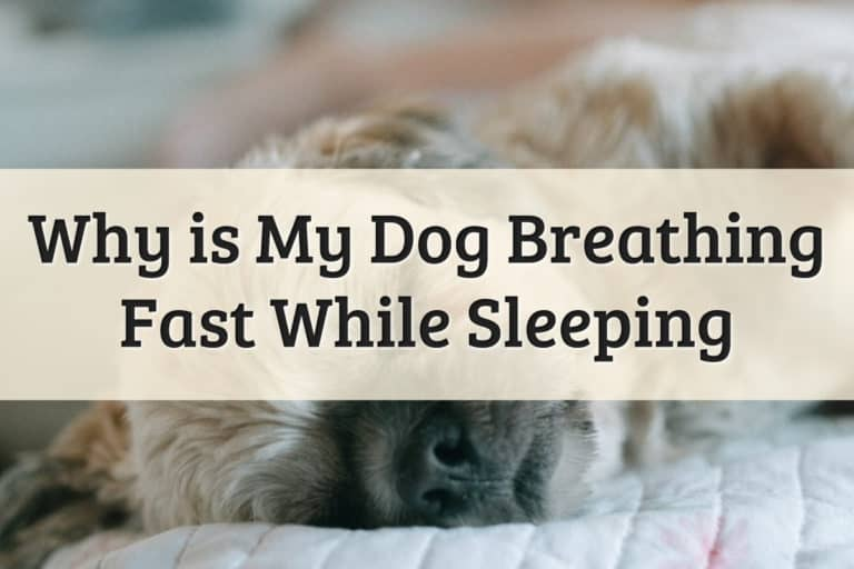 Why Does My Dog Breath Fast While Sleeping Feature Image