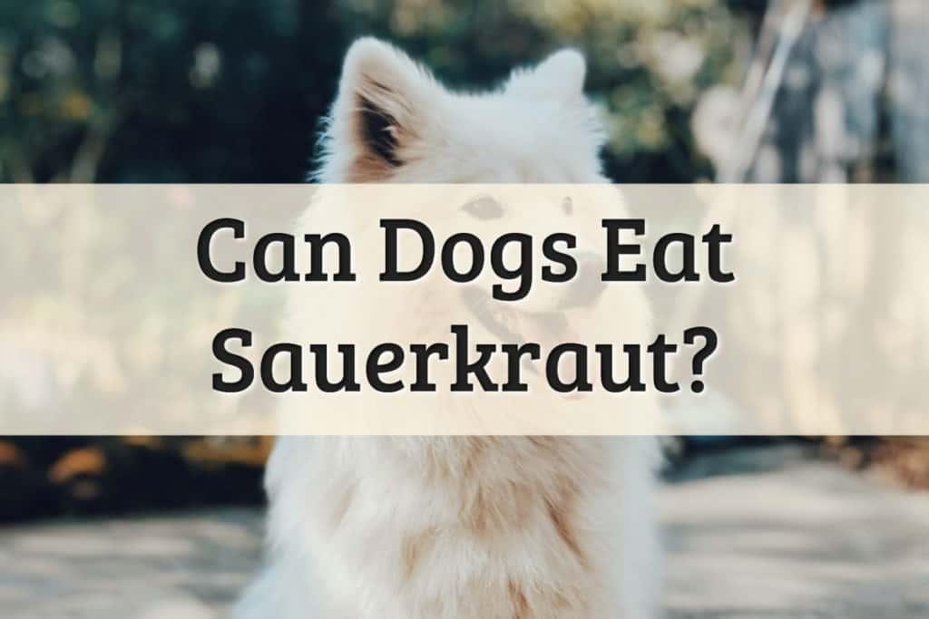 Can Dogs Eat Sauerkraut Feature Image