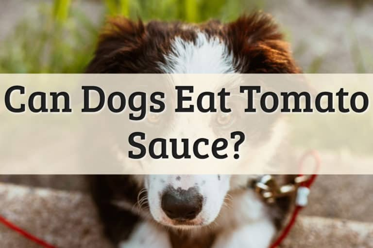 Dogs Eat Tomato Sauce Feature Image