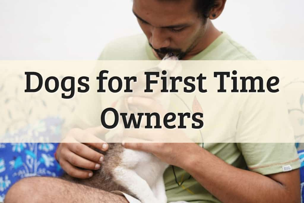 Dogs for First Time Owners Feature Image