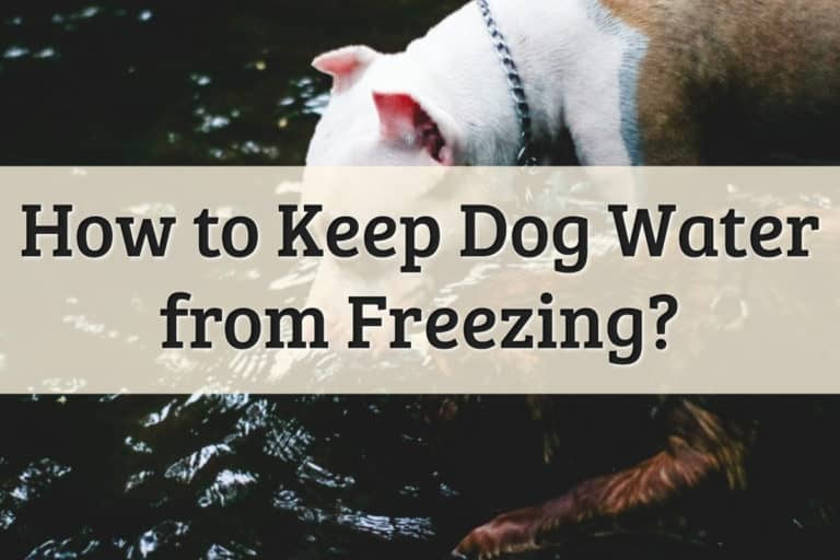 How To Keep Dog Water from Freezing Feature Image