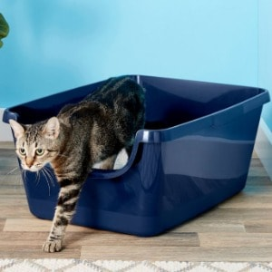 Best Litter Boxes Review
