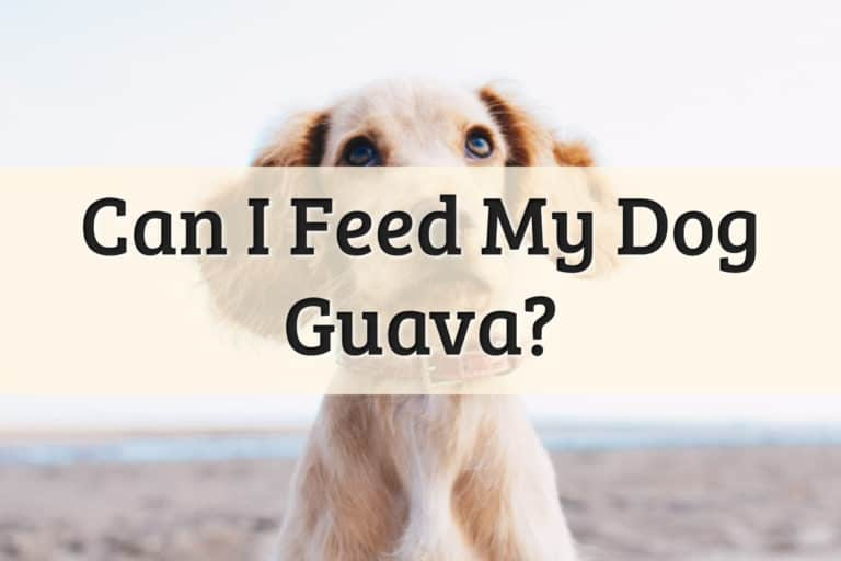 Dogs Eat Guava Feature Image