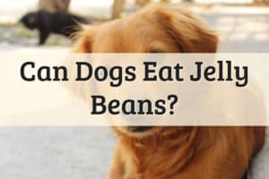 Can Dogs Eat Jelly Beans Feature Image