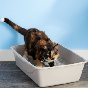 Litter Box Best to Buy for Your Cat