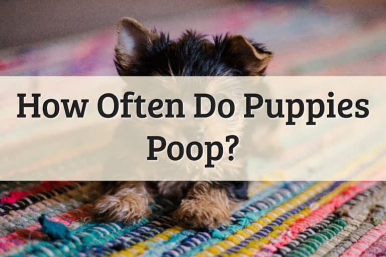 How Often Do Puppies Poop Feature Image