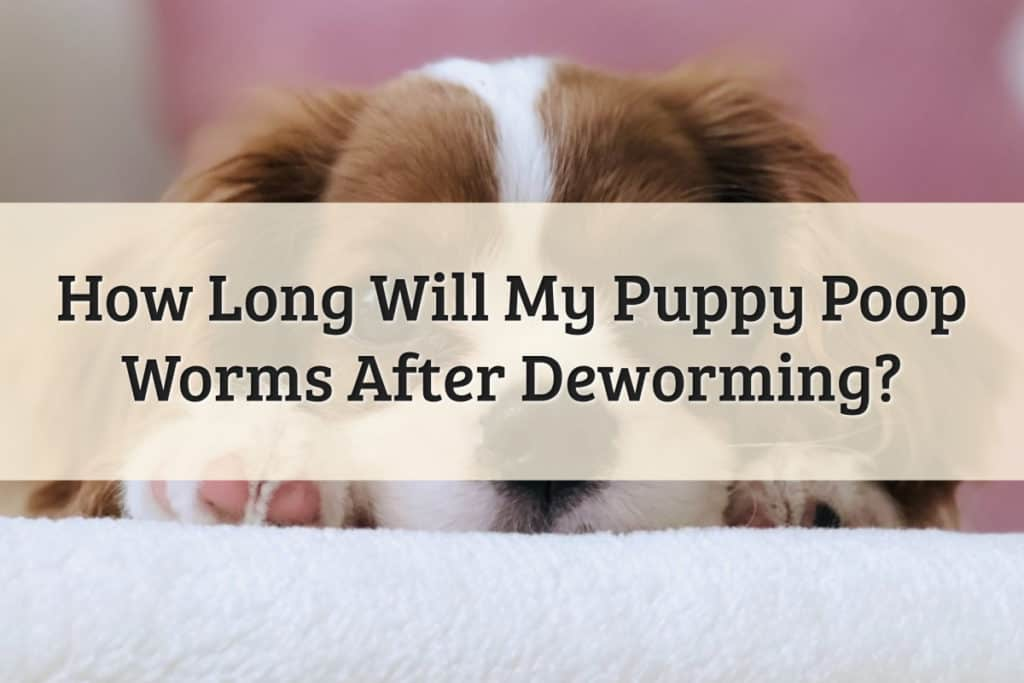 How Long Will A Puppy Poop Worms After Deworming Feature Image