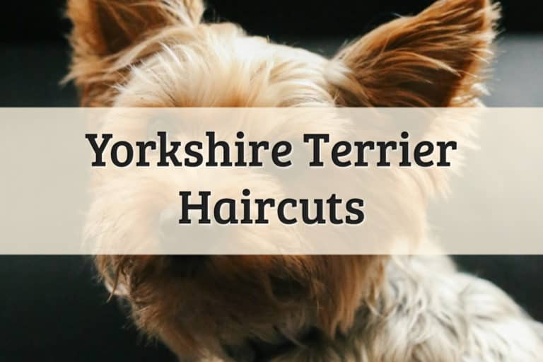 Haircuts for Yorkies Feature Image