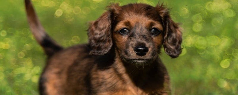 How Long After Deworming a Puppy Are the Worms Gone
