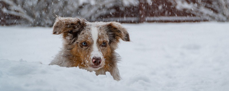 Keep Your Dog's Water Drinkable in Winter