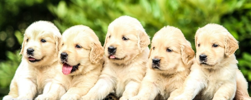 How Many Times do Puppies Poop a Day