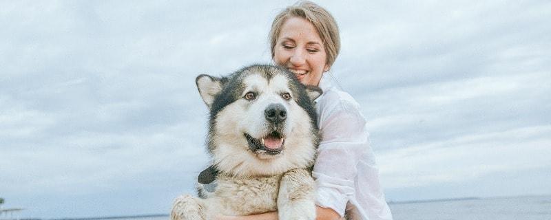 Husky Health Problems and Lifespan