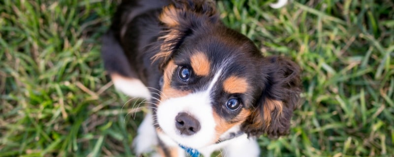 What You Need to Know About Puppies Pooping