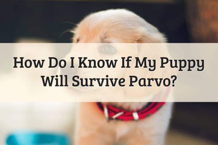 How to Know if Puppy Will Survive Parvo Feature Image
