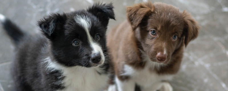 How Long do Puppies Poop Worms After Deworming