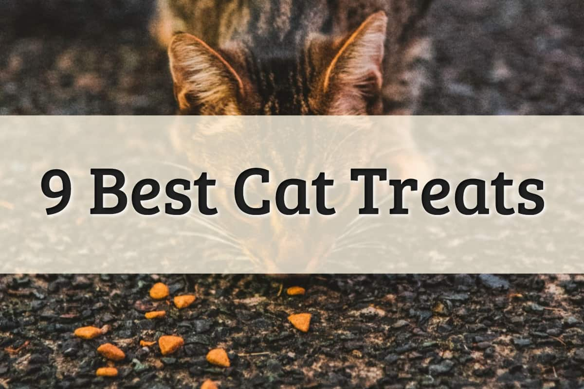 Best Treats for Cats Feature Image