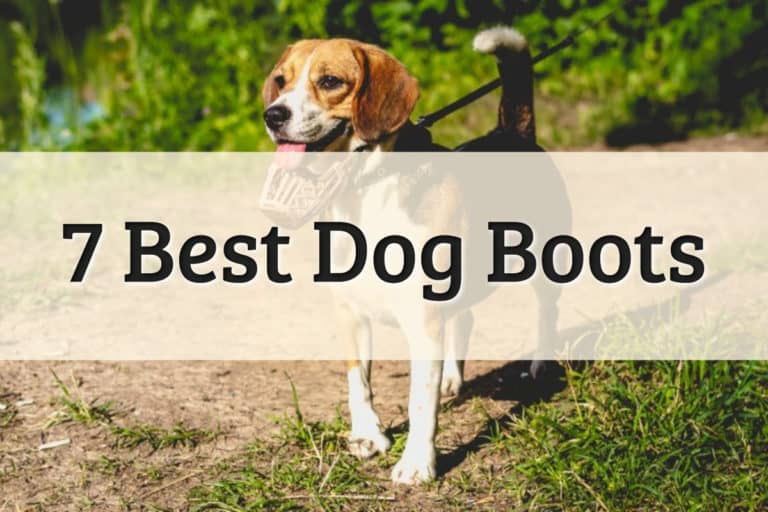 The Best Dog Boots Feature Image