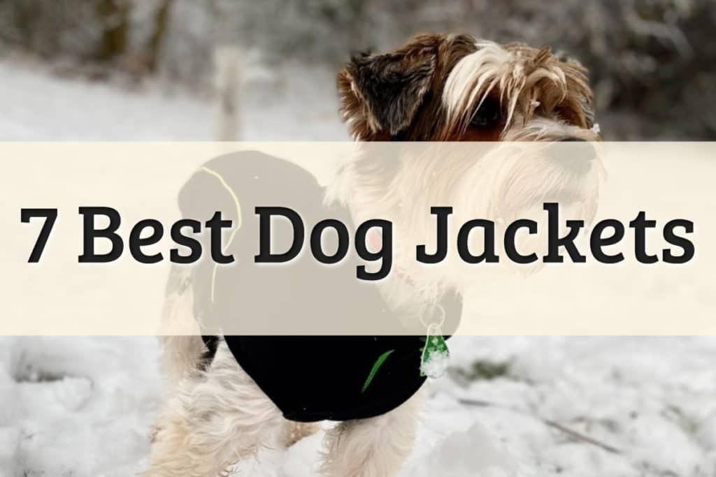 Best Jackets for Dogs Feature Image