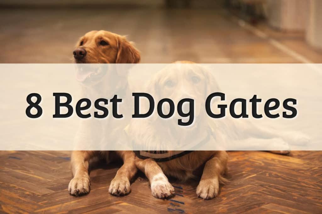 Best Indoor Dog Gate Feature Image
