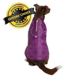 Winter Coat for Your Pet Pooch