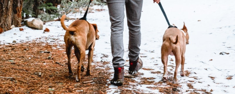 Dog Booties with Leg Cuff
