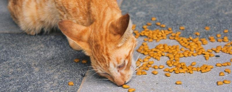 Chicken Breast Ingredients in Cat Treats