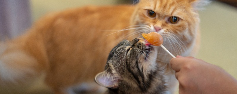 Cat Treats Low in Fatty Acids