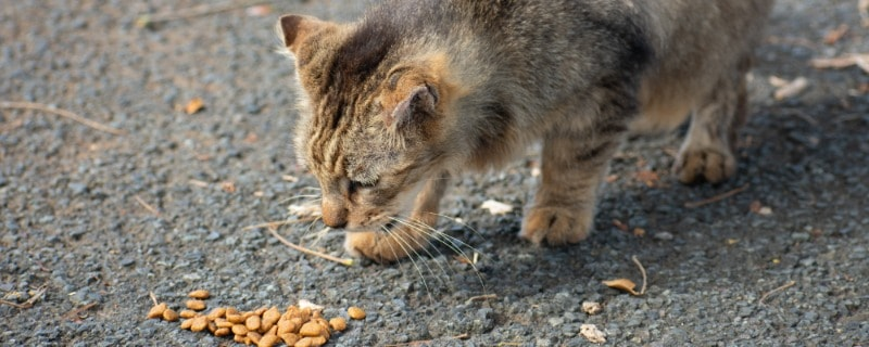 Delicious Snacks to Feed Your Cat