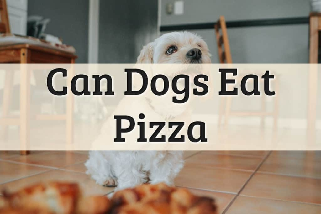 Can Dogs Eat Pizza Feature Image