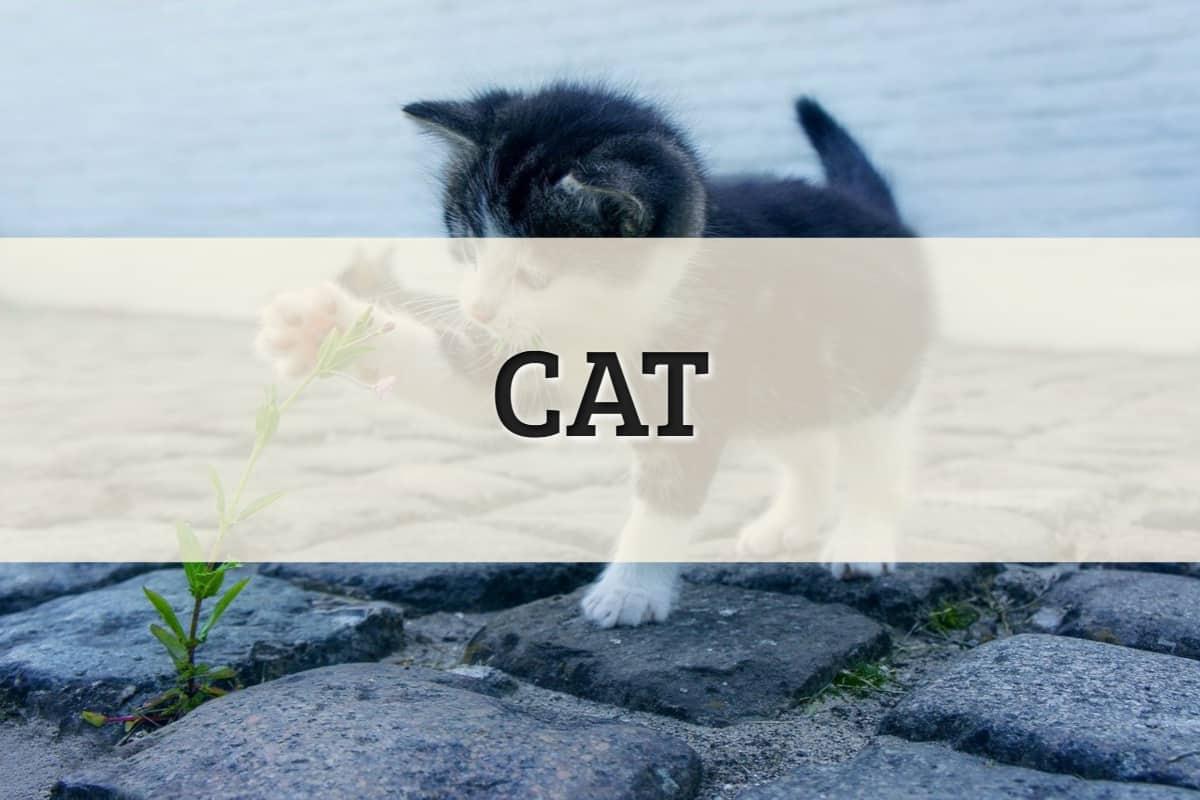 Cat Featured Image