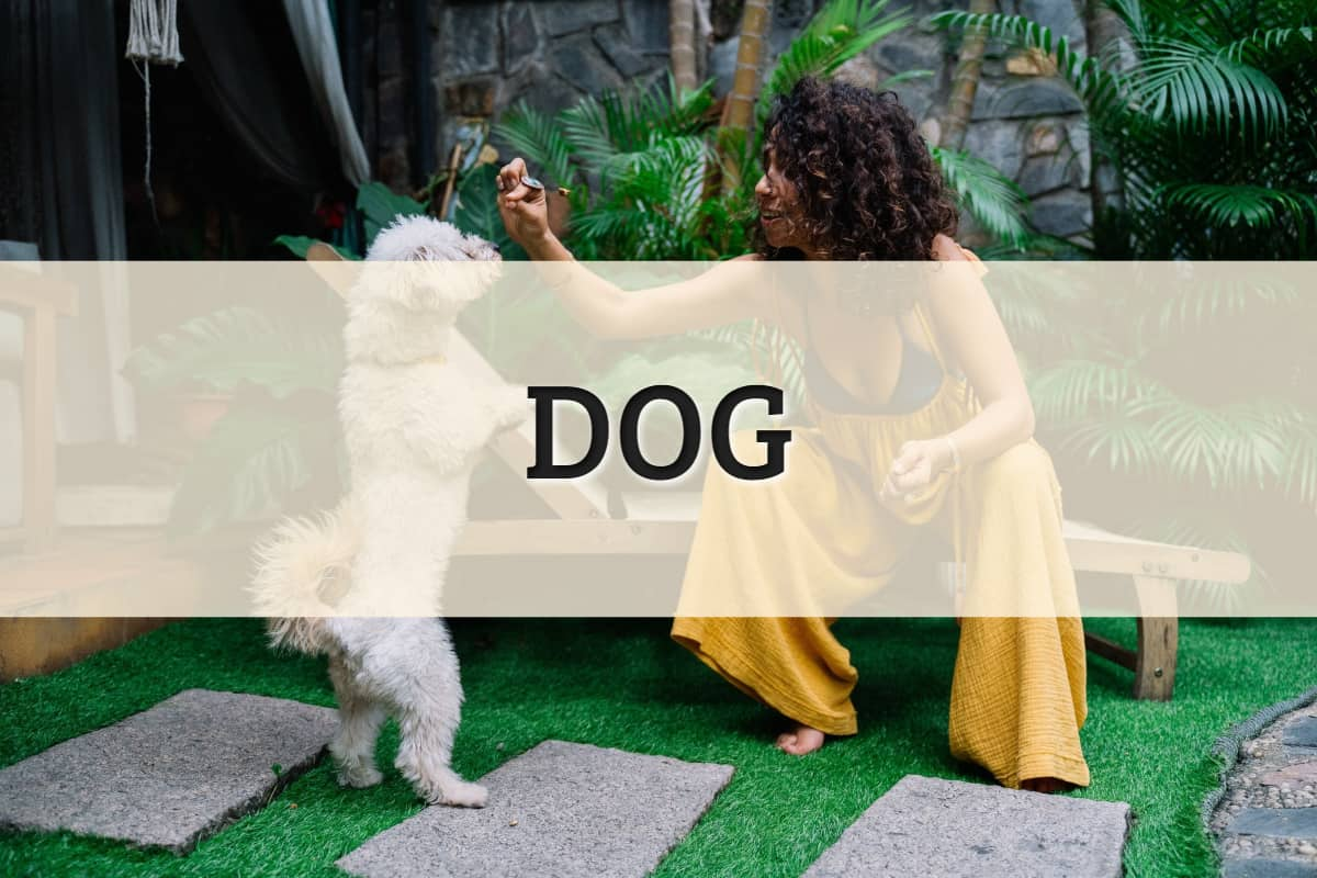 Dog Featured Image