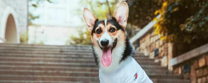 Seek Veterinary Medicine
