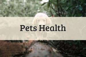 Pets Health Featured Image