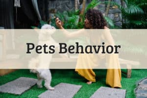 Pets Behavior Featured Image
